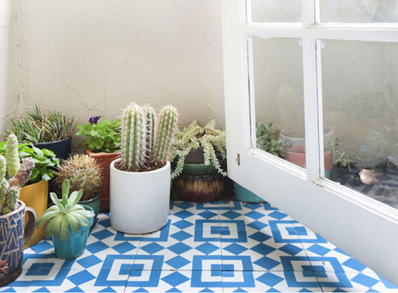 Collection of small cacti on deck tiled with blue and white cement tiles